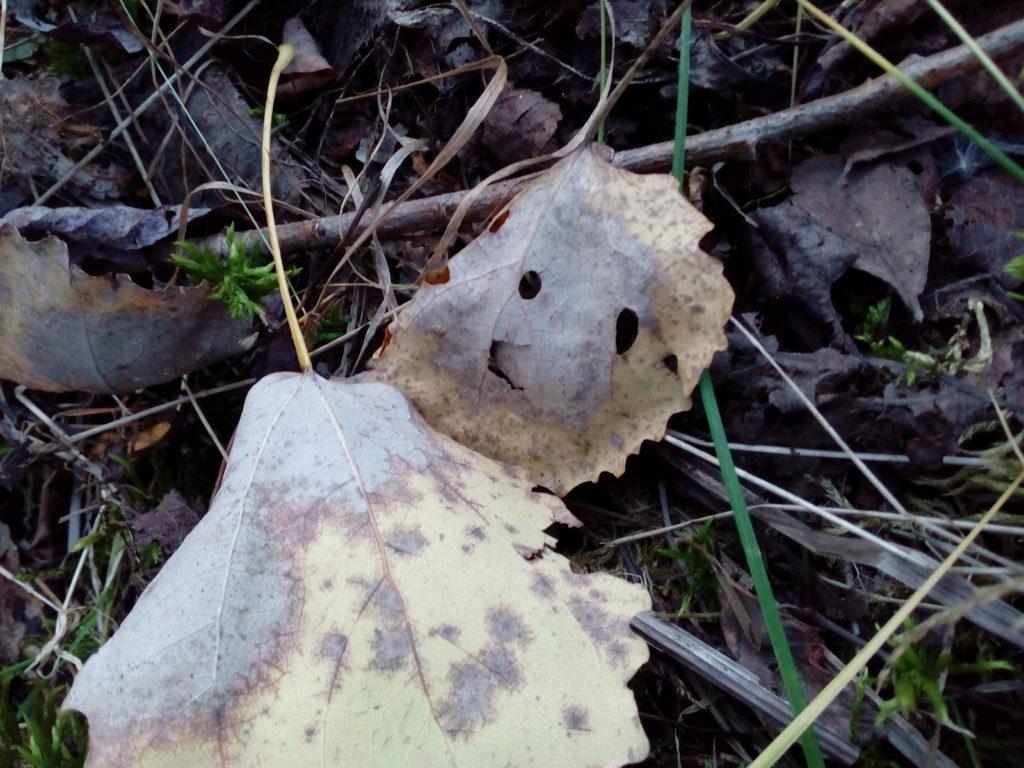 Листик в лесу